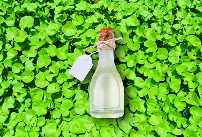 Najava Mariniranje brahmi plant Pixabay