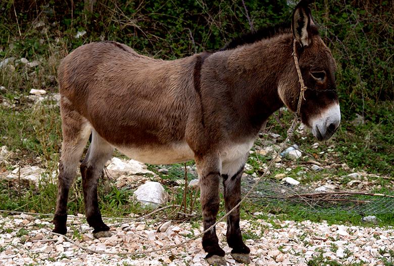 Mariniranje donkey-by babaric78 Pixabay