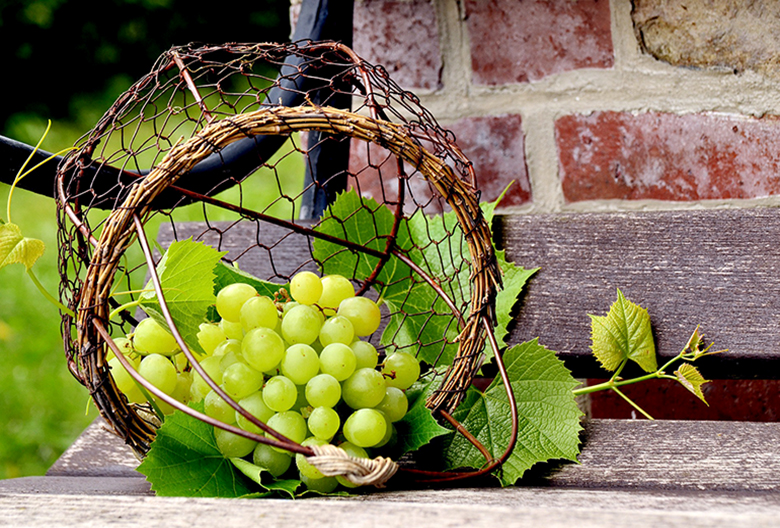 Mariniranje grapes-by congerdesign Pixabay