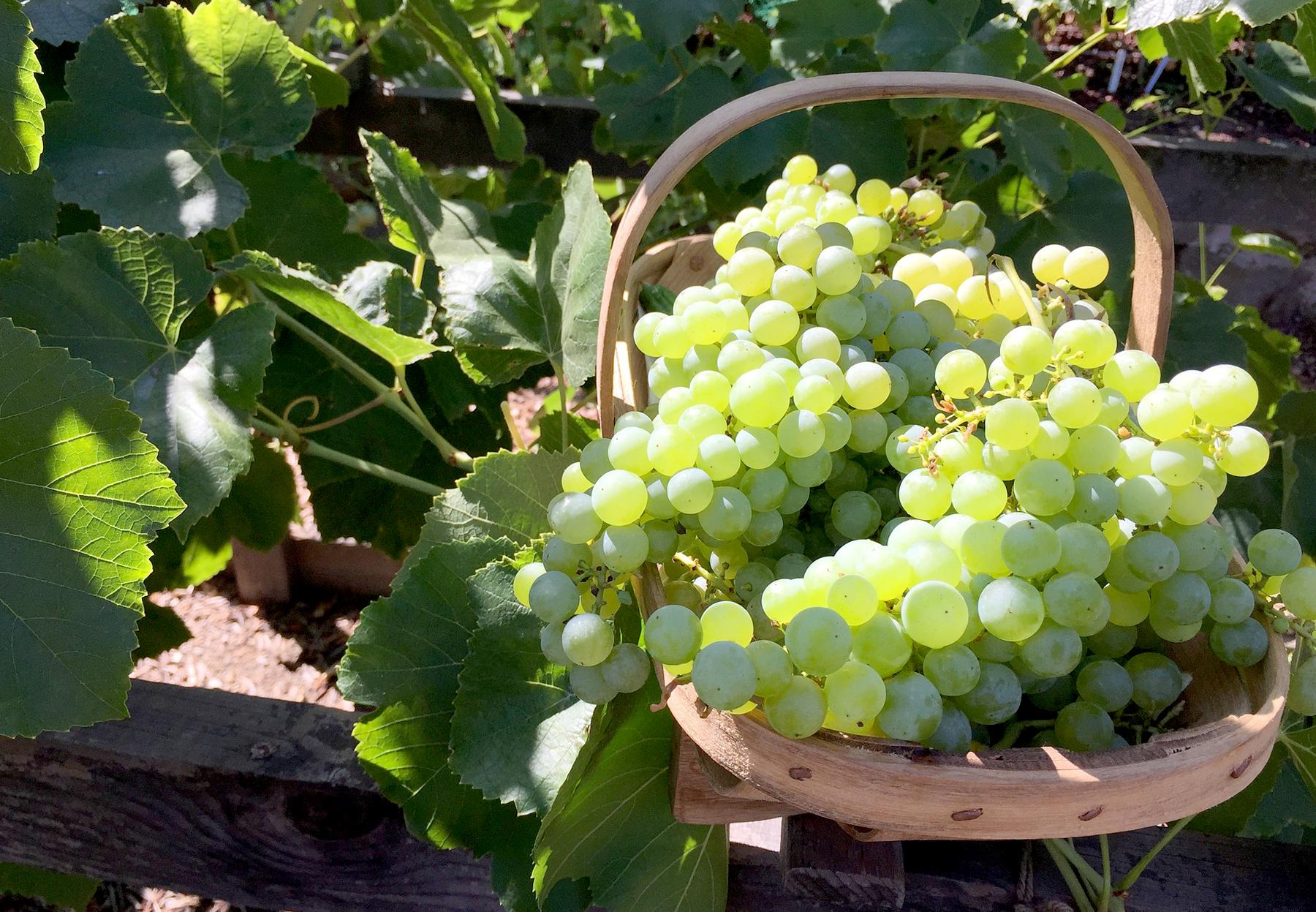 http://mariniranje.rs/wp-content/uploads/2020/04/Mariniranje-4-my-garden-by-Mike-Kiley-on-Pixabay.jpg
