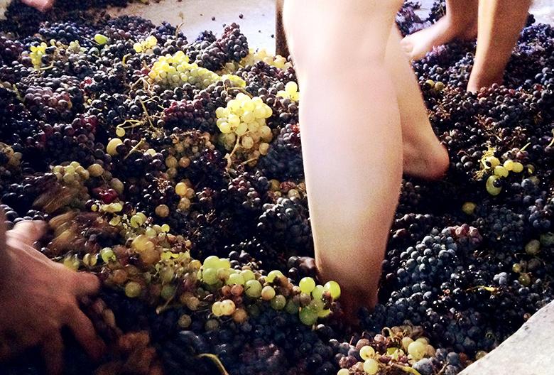 Mariniranje muljanje grozdja by Alex Fragoso from Pixabay