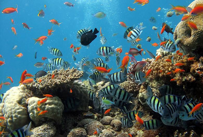 Mariniranje red sea fish on Pixabay