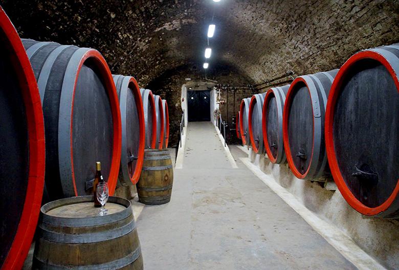 Mariniranje viticulture by ivabalk from Pixabay
