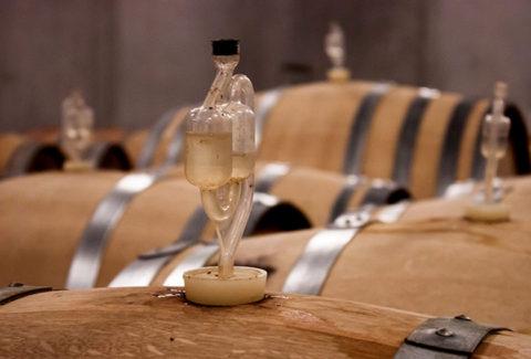 wine barrels Mariniranje photo by Leo Hau on Pixabay