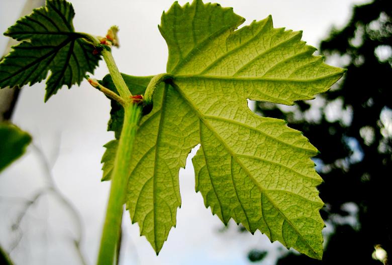 Mariniranje leaf-by Lynn Greyling Pixabay